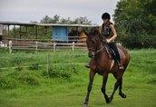 Sprzedam konie 2