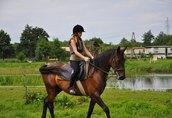 Sprzedam konie 3