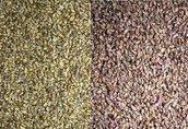 Zaprawiarka nasion typ R 45 maszyna do sortowania i czyszczenia