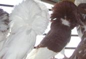 perukarze likwidacja holowlii