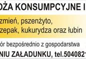 Żyto Kupię zboża paszowe: pszenicę, pszenżyto, żyto...