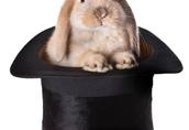 Sprzedam króliki z certyfikatem ekologicznym