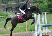 Afrika - Lovely black mare for a lady