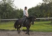Sprzedam klacz - Ksena - koń do rekreacji