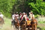 Nauka jazdy konnej, przejażdżki bryczkami, pensjonat dla koni