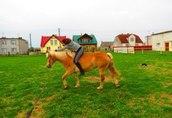 Nauka jazdy konnej, przejażdżki bryczkami, pensjonat dla koni 2