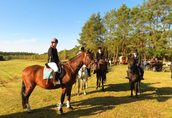 Nauka jazdy konnej, przejażdżki bryczkami, pensjonat dla koni 3