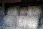 Sprzedam suche siano doskonałej jakości ze stodoły 100 ton. KWIDZYN