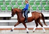 horsesales.lt