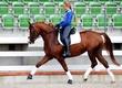 Ogiery http://www.horsesales.lt/en/horses_for_sale