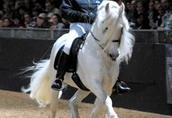 Koń fryzyjski adorable za darmo przyjęcia
