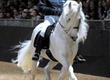 Klacze Adorable konie fryzyjskie do przyj