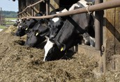 Kredrol najkorzystniejsze kredyty dla rolników