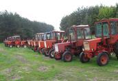 Pozostałe ciągniki Kupię Władymirca t-25 MF235, MF255, MTZ82, MTZ80...