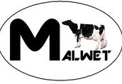 Import i sprzedaż krów i jałowic z Danii
