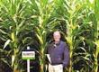 Kukurydza Najlepsza odmiana kukurydzy