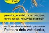Pszenica Skup zboża paszowego i konsumpcyjnego, ekologicznego...