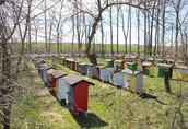 Sprzedam Pszczoły z Ulami Warszawskie zw. Miodarka nowa