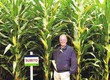 Kukurydza Sprzedam nasiona kukurydzy - r