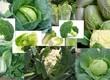 Warzywa Nawiążę współpracę z odbiorcą zainteresowanym