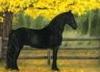 Klacze Piękny Sen konia (Bella), jest