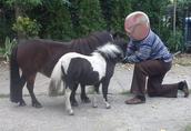 Koń miniaturowy - klacz jak Falabella 1