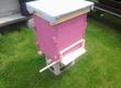 Pasieki Witam sprzedam odkłady pszczele