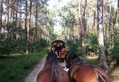 Nauka jazdy konnej, przejażdżki bryczkami, pensjonat dla koni 1