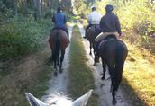 Nauka jazdy konnej, przejażdżki bryczkami, pensjonat dla koni 4