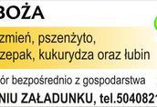 Pszenżyto Kupię pszenżyto zbiory 2014 i starszy ilości min...
