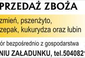 Jęczmień Kupię jęczmień zbiory 2014 i starszy ilości min...