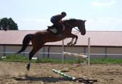 stajnia, pensjonat dla koni