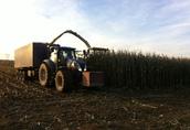 koszenie kukurydzy na kiszonke 1