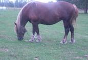 Koń na sprzedaż 1