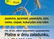 Łubin żółty Kupię zboża: pszenica, pszenżyto