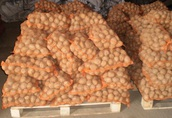 Sprzedam ziemniaki jadalne IRGA, INNOVATOR
