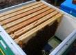 Pozostałe pszczelarstwo Cena dotyczy odkładu pszczół.Przyjmujemy