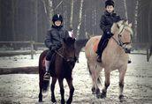 Zimowisko Stajnia Dąb dla dzieci i młodzieży  1