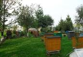 sprzedam odklady pszczele