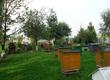 Pozostałe pszczelarstwo Sprzedam ODKŁADY PSZCZELE w sezonie