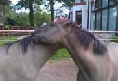 Sprzedam konia do hipoterapii, nauki jazdy konnej