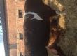Byki na ubój Witam, sprzedam byki. Więcej informacji