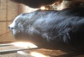 byki na ubój 3
