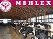 """Krowy """"Jakość gwarantuje rentowno"""