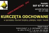 kurki koguty kurczeta