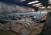 Stanowiska dla bydła, agrafki dla bydła, przegroda legowiskowa 1