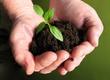 Dom i ogród Uprawy roślinne wymagają zbilansowanej