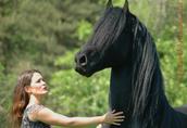 Najnowsze: Dostać ten piękny fryzyjski koń tutaj teraz   3