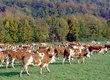 Krowy W związku ze zmianą profilu dzia