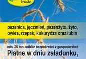Pozostałe strączkowe Kupię zboża paszowe: pszenicę, pszenżyto, żyto...